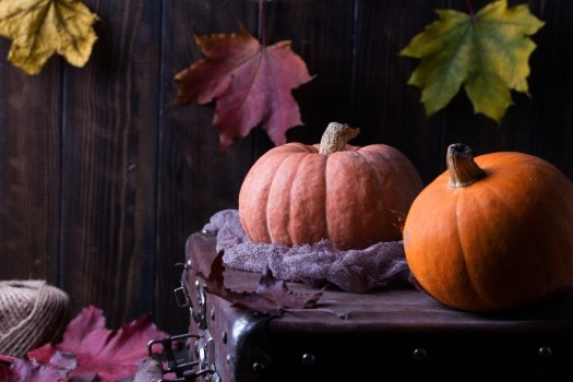 Pumpkins on old suitcase with fall leaves and aged wooden fence.